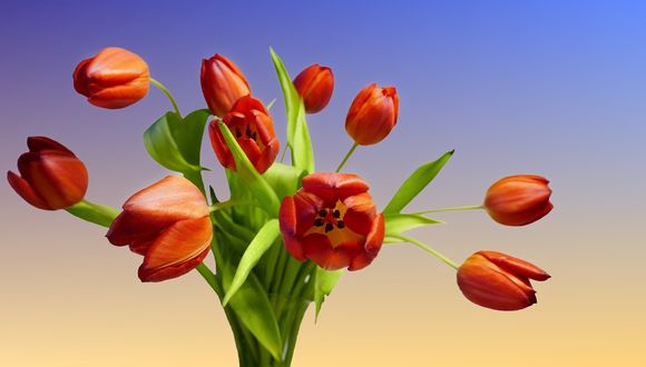 tulip-bouquet-3260725_1920